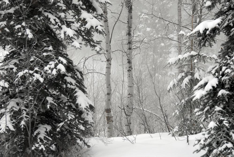 Winter at Home _DSC0536.jpg