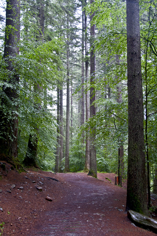 Hermitage Woods-DSC_06300683.jpg