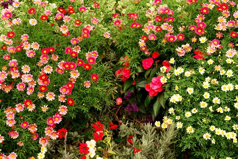 DSC00040.jpg VERY HAPPY FLOWER BOX FLOWERS!