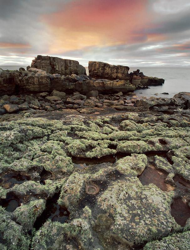 Lichen and Rocks