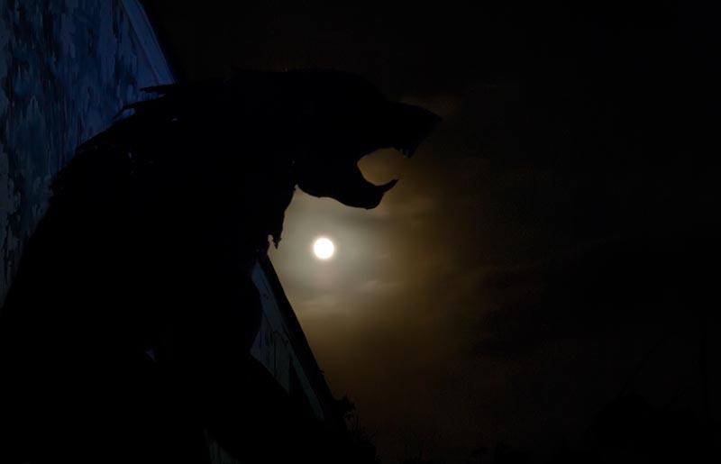 Howling Wild Night