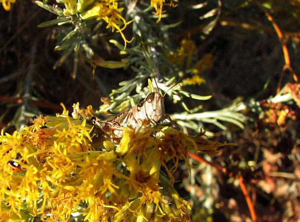IMG_1796 grasshopper.jpg