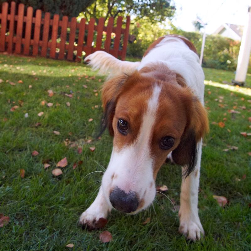 2011-10-17 Dog