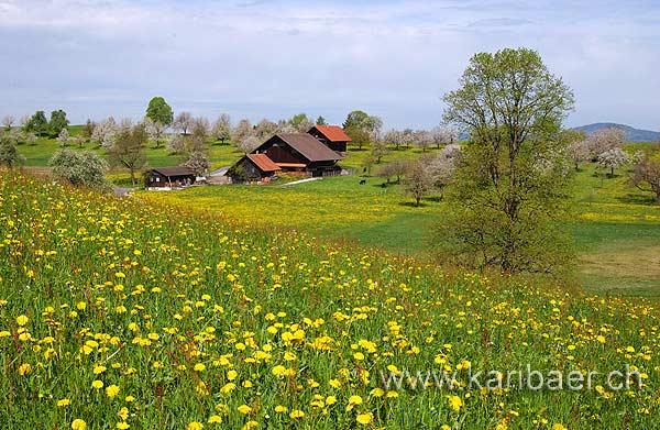 Fruehling / Spring (2619)