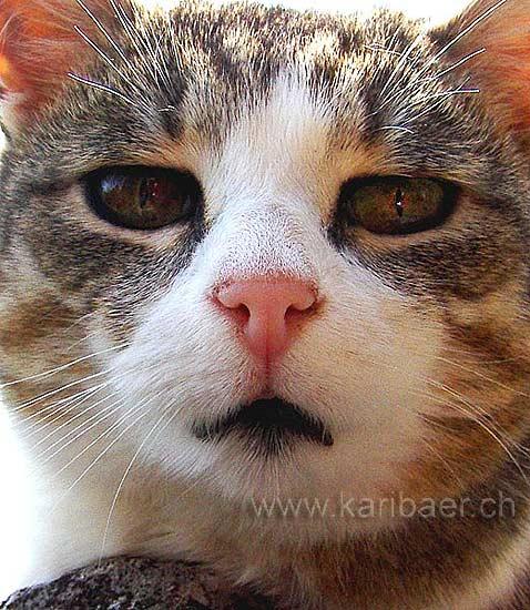 Katze / Cat (01201)