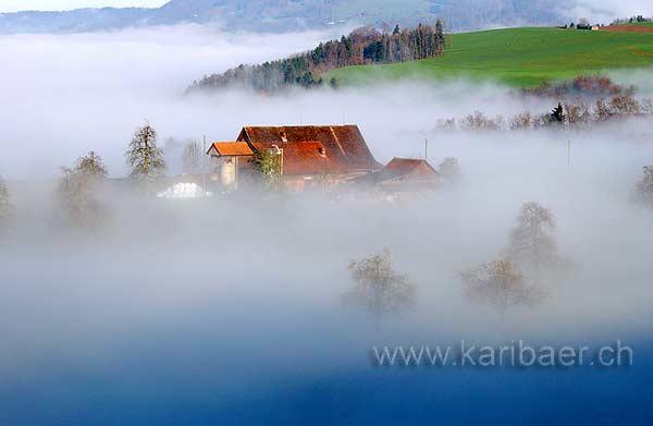Nebel / Fog (8267)