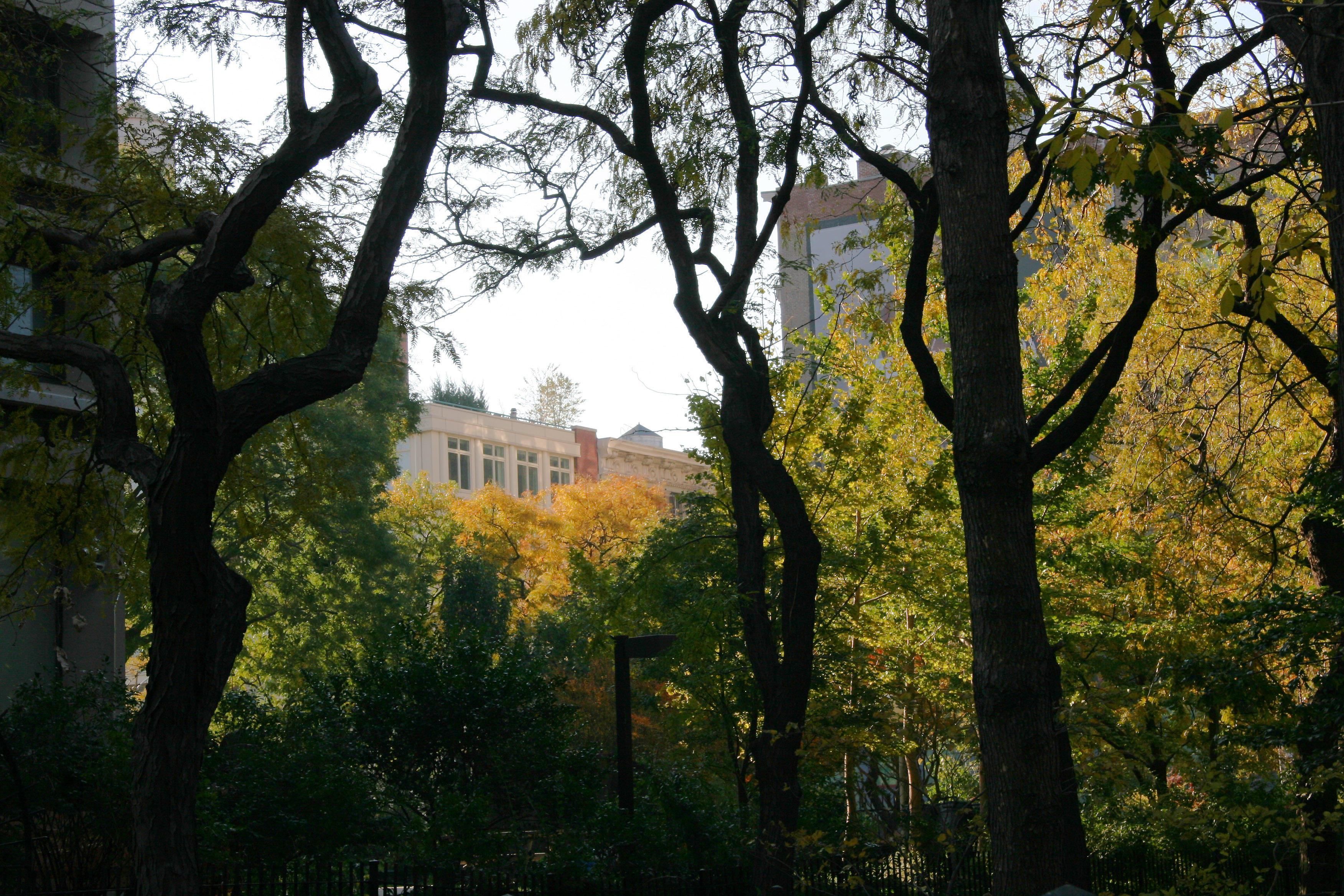 Time Landscape & 505 LaGuardia Place Gardens