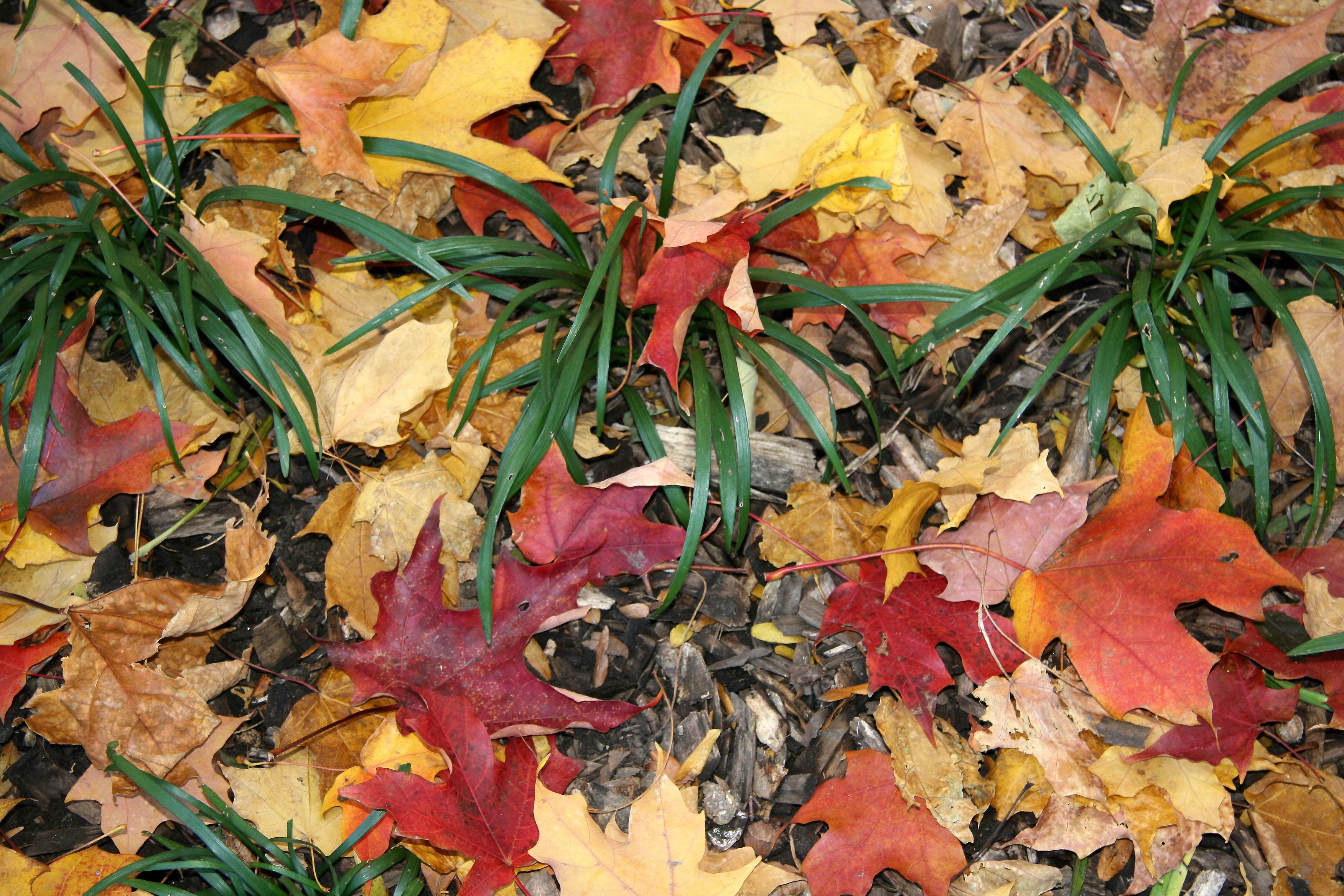 Maple & Liriope Ground Foliage