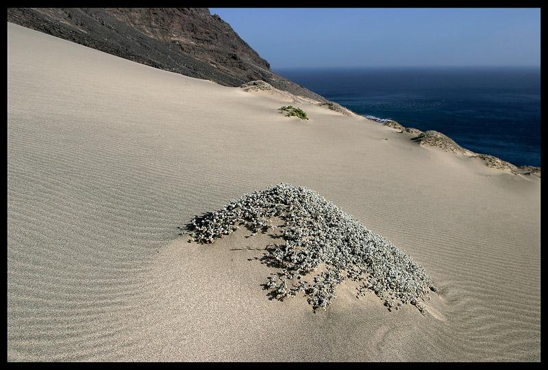 Local desert climate on Branco