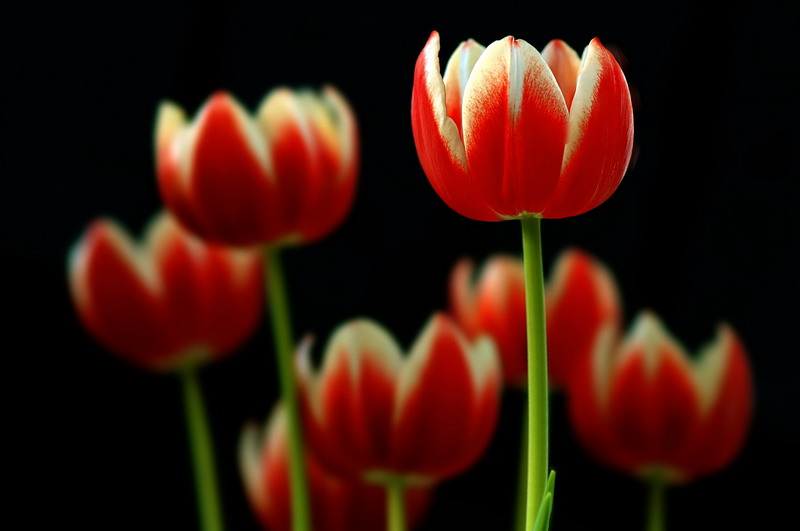 11/11/06 - Tulip & Friends
