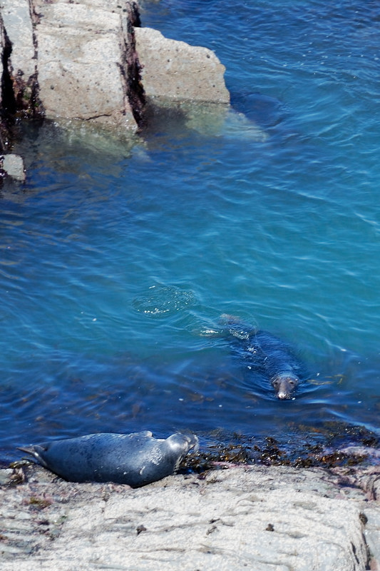 and do visit the seals just east of Morte point