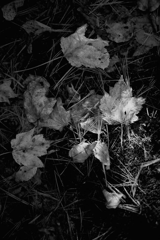 Fallen Leaf Group