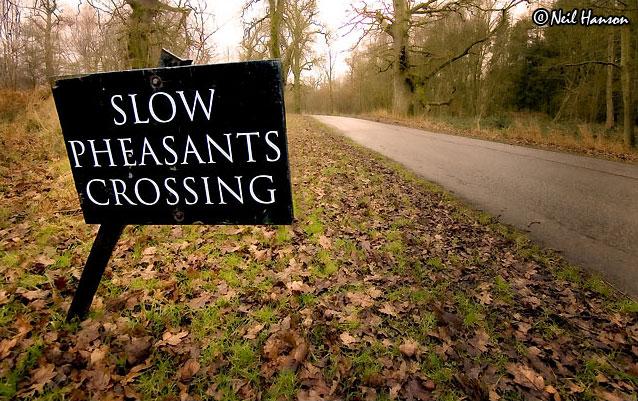 Slow Pheasants