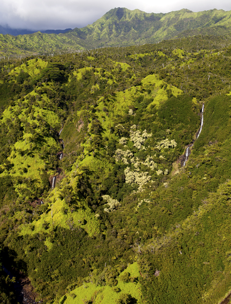 Mt. Waialeale, Kauai, HI