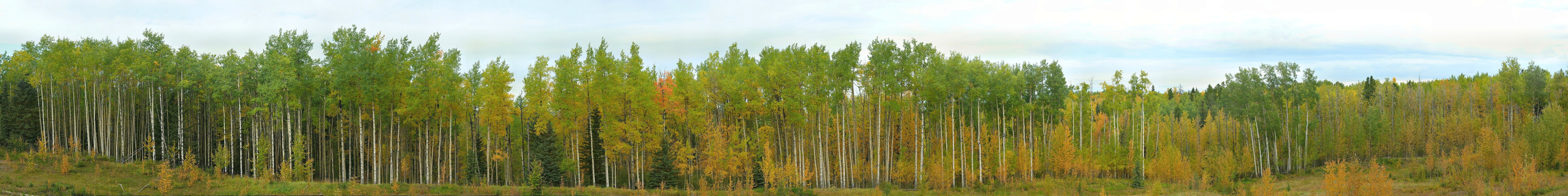 obed aspens cropped.jpg