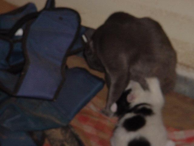 kitten nursing