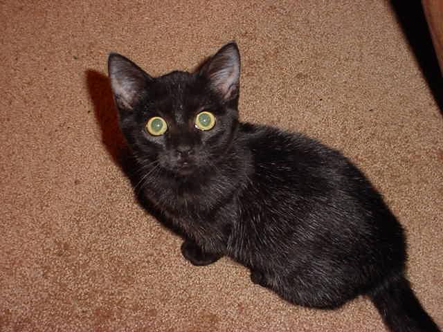 black kitten looking