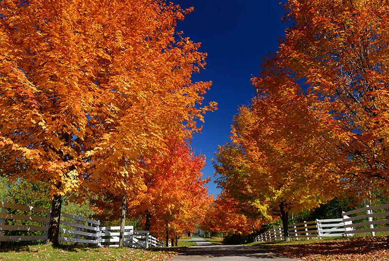 96 Heart Lake Maples 2.jpg