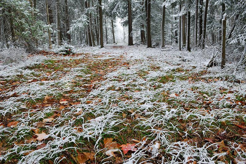 97 Fresh snow on woodland grass.jpg