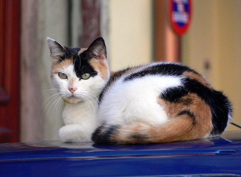 chat alsacien- Kaysersberg.
