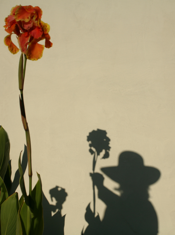 The Season of Long Shadows