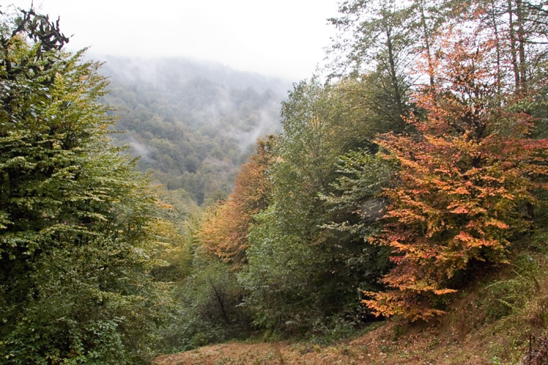 Autumn in north forests