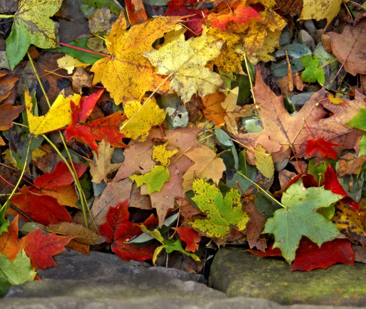 Fall leaves 082.jpg