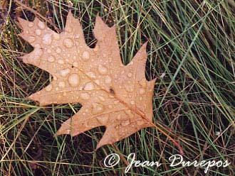 Autumn shower