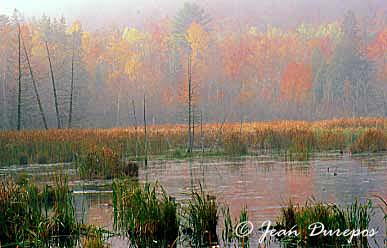 A morning mist