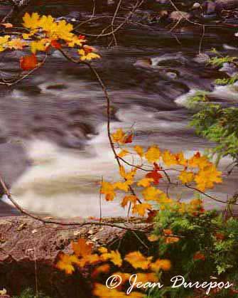 Fall Brook