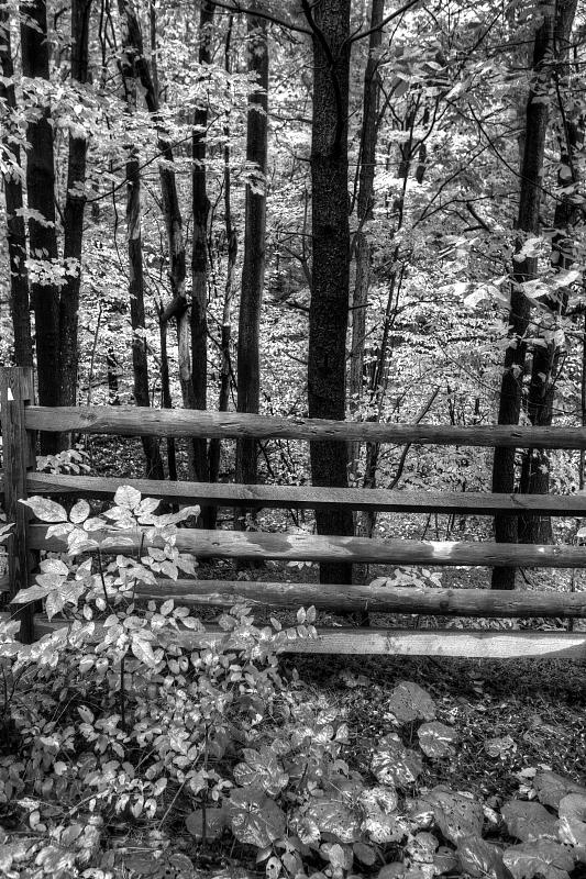 Reiter Road In Autumn In Black & White