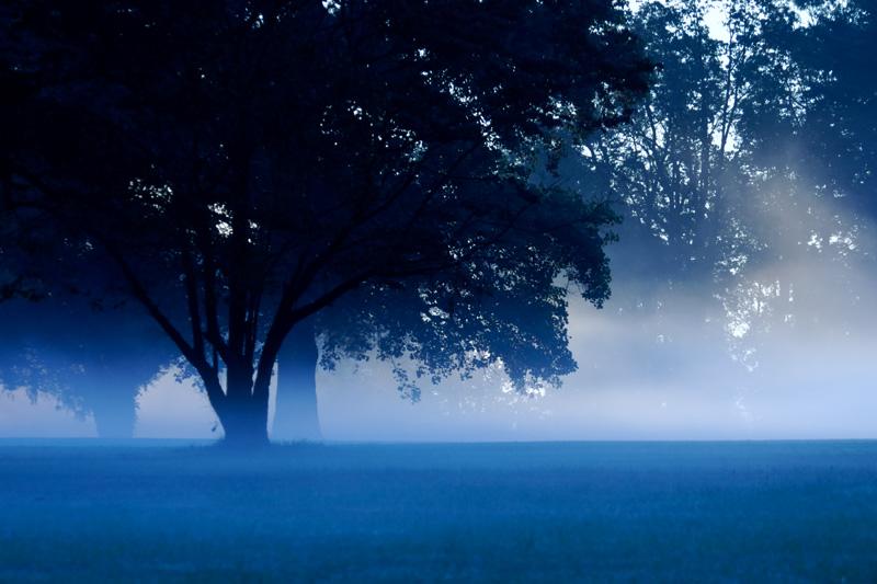 Sunrise through the fog!