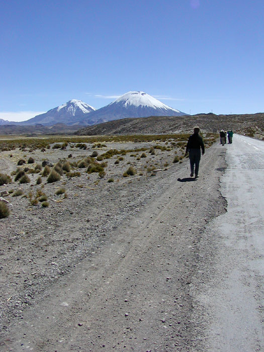 Birding in Lauca National Park