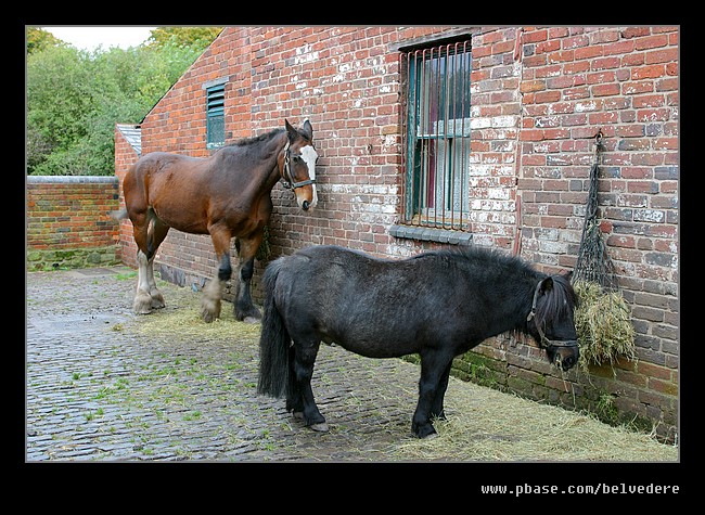 Horse & Pony, Black Country Museum