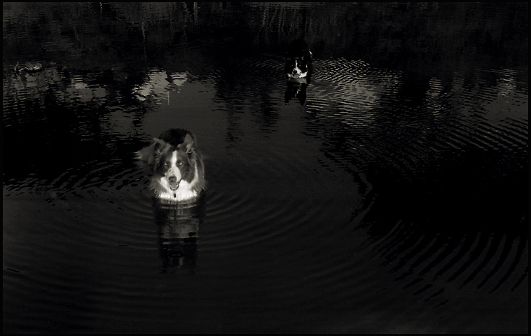 dogs_water_dark.jpg