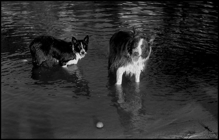 dogs_water_2.jpg