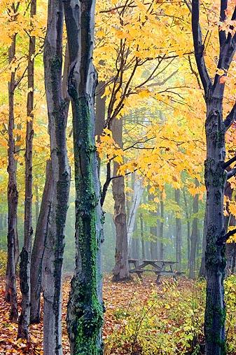 Autumn Trees 20061004