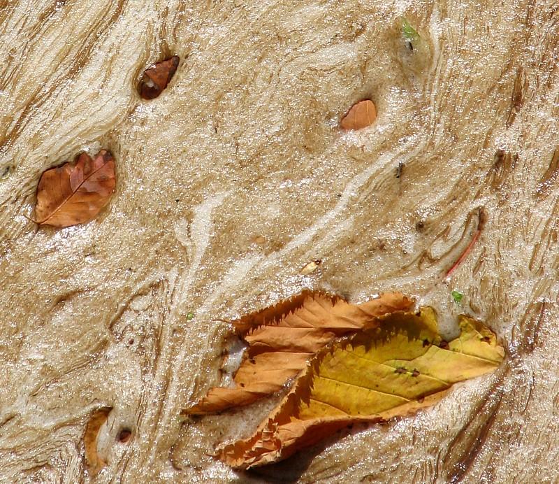 Lautomne arrive et ses premières feuilles  mortes