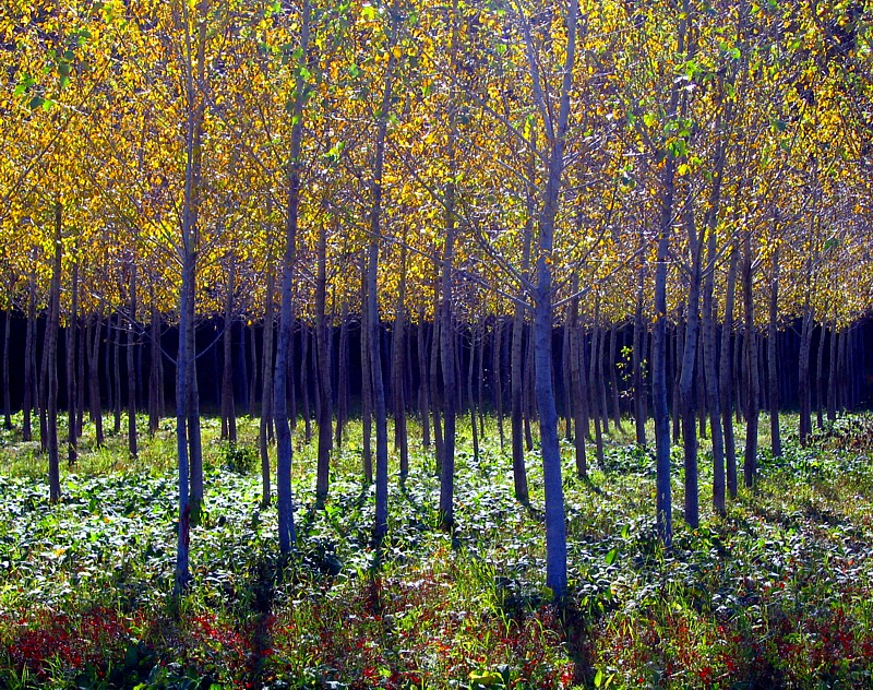 la jeune forêt du bas de la Baie