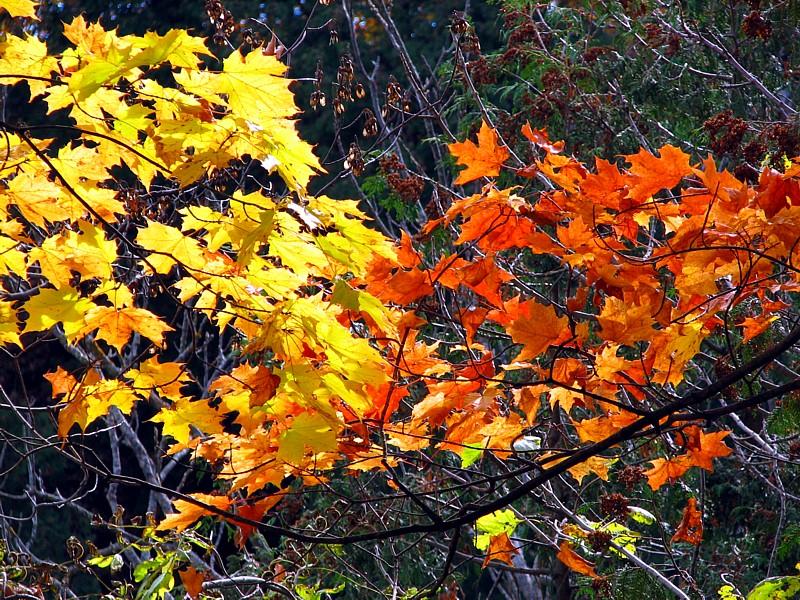 flamme de feuilles