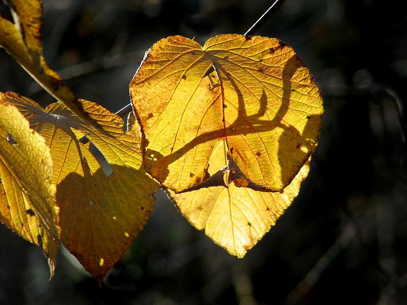 lombre sur les feuilles