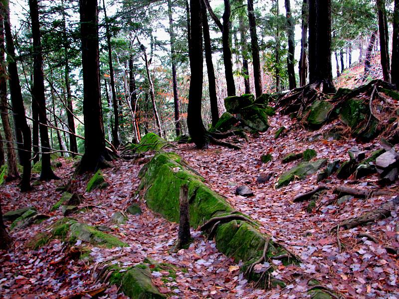 Forêt dautomne à St-Nicolas