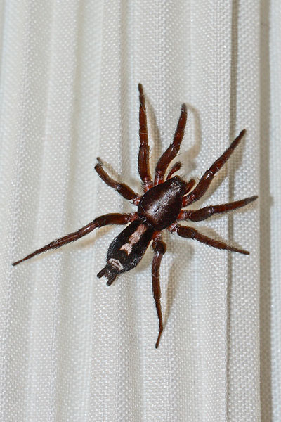 Spider on Lampshade