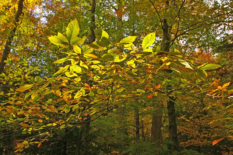 Warm Sun in Cool Autumn Air
