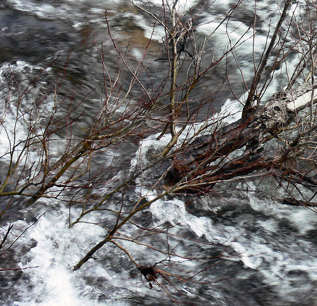 River and branches