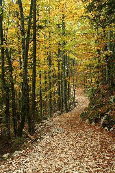 Autumns woods