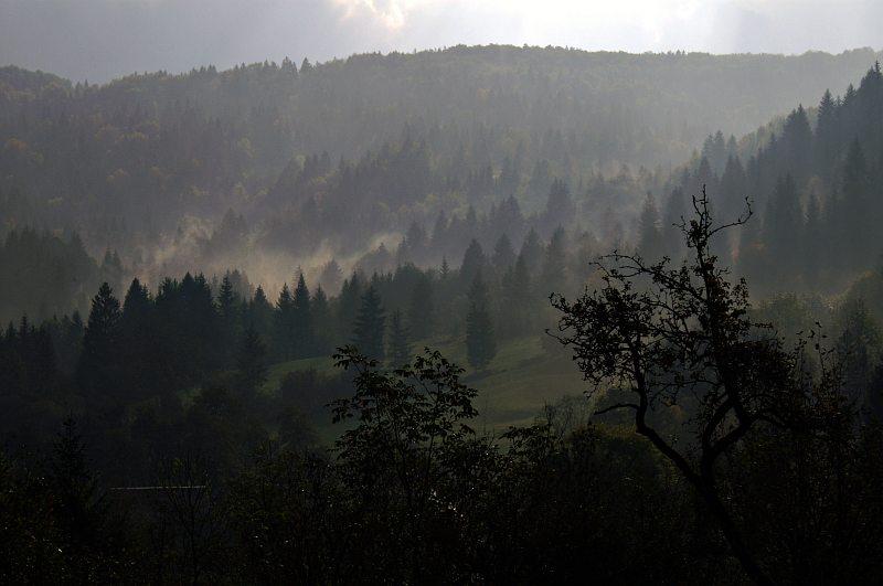 Morning mist near Stara Fužina