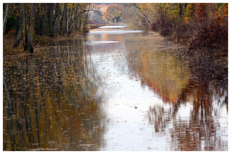 Calm Mingo River