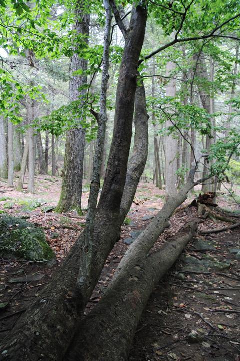 Carved Tree.jpg