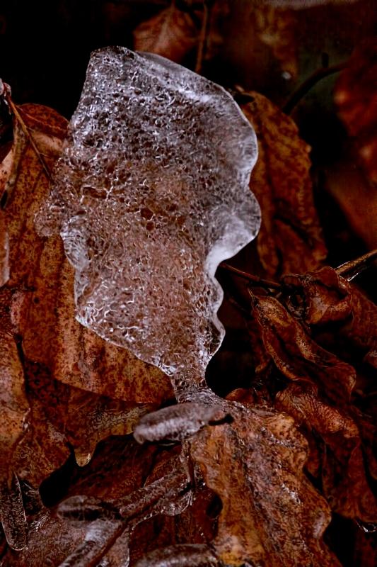 Ice Storm 06